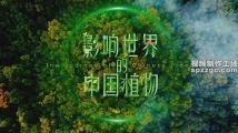 《影响世界的中国植物》背景音乐