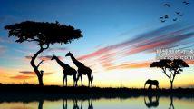 BBC纪录片《非洲》Africa原声大碟