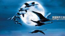 纪录片《迁徙的鸟》电影原声配乐